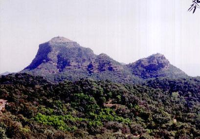 forest_pachmarhi