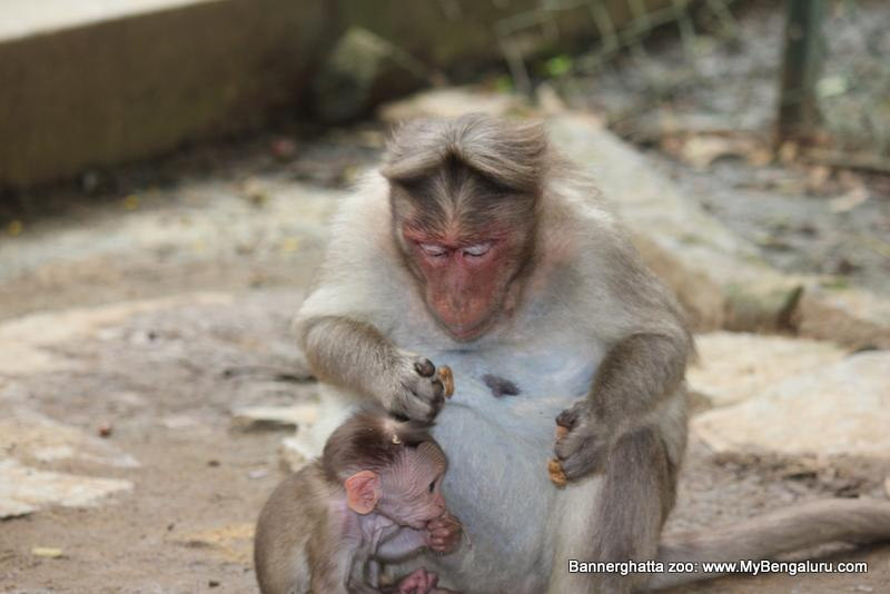 Monkey mum and baby