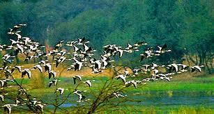 Birds in the Bhitarkanika National Park