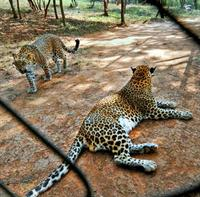 Indira Gandhi Zoological Park images