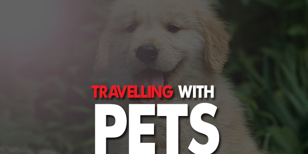 Travelling with pets in India