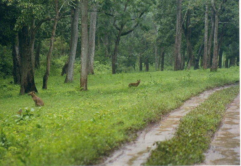 Nagarhole National Park in Karnataka