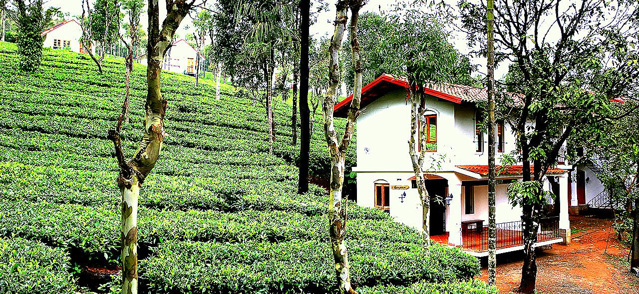 Tea Terrace Vythiri Best Honeymoon Resort in Wayanad
