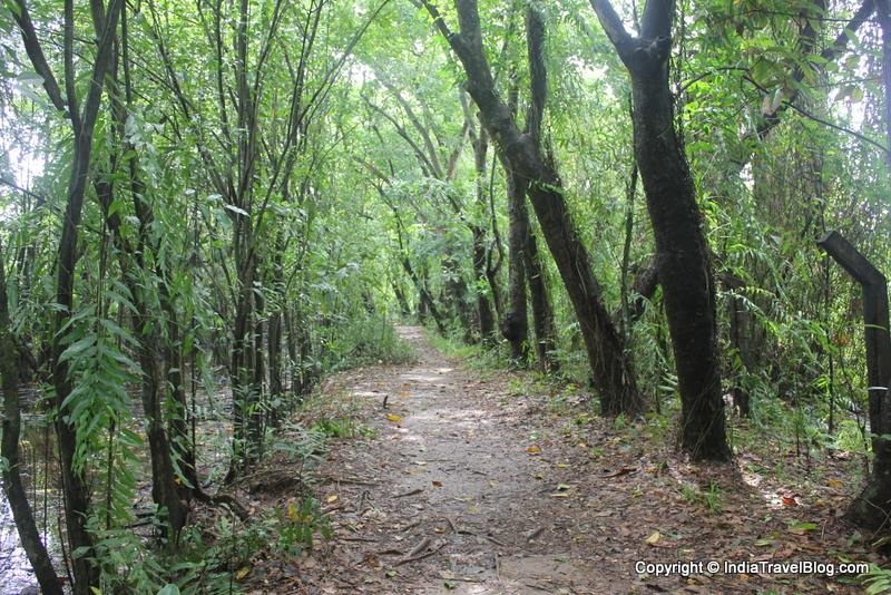 Walking trails in Kumarakom Bird Sanctuary