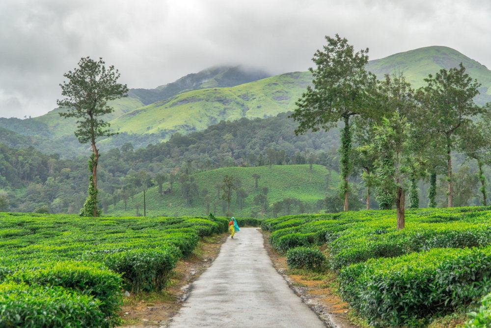places to visit near wayanad